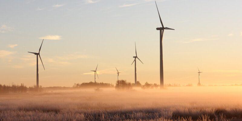 Éoliennes et biodiversité